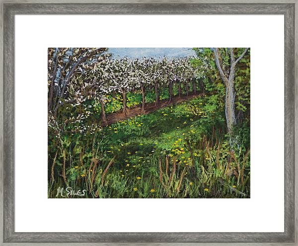Cherry Orchard Evening Framed Print