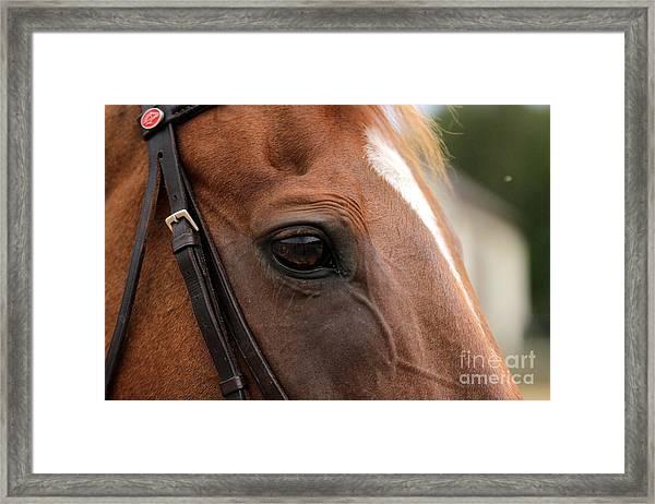 Chestnut Horse Eye Framed Print