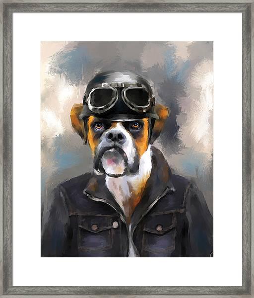 Chic Boxer Aviator Framed Print