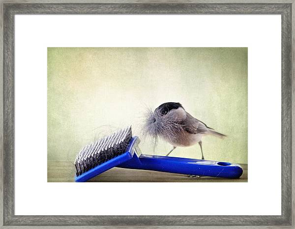 Chickadee At Work Framed Print