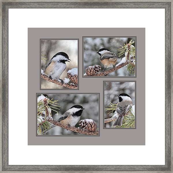 Chickadees In Winter Framed Print