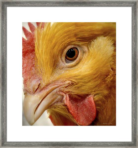 Chicken Vision Framed Print