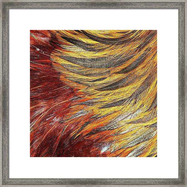 Chickenstract Framed Print by Jan Dolan (foto.phrend)