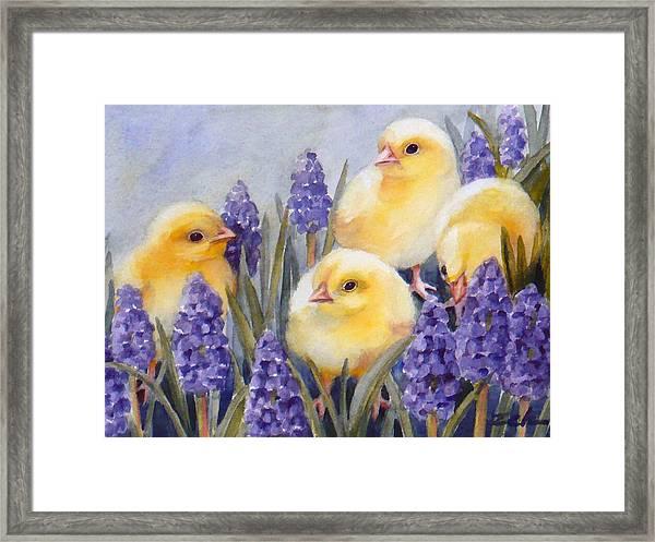 Chicks Among The Hyacinth Framed Print