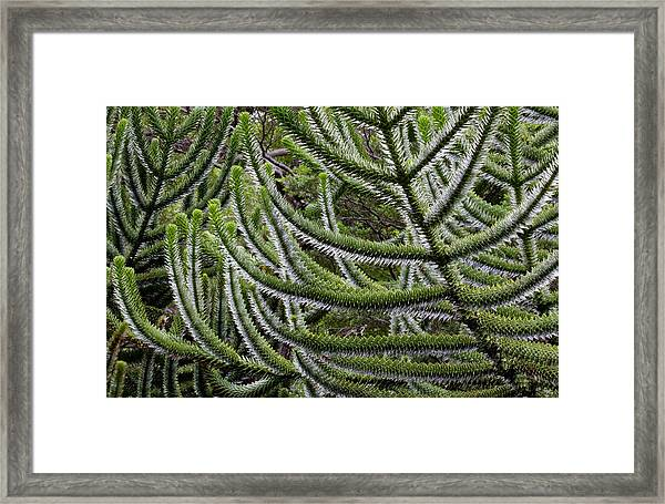 Chile South America Detail, Bark Framed Print by Scott T. Smith