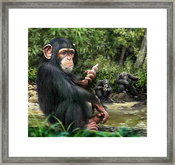 Chimpanzee Framed Print by Owen Bell