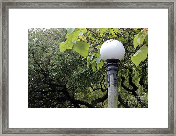 Chittenden Garden Framed Print by Stephen Prestek