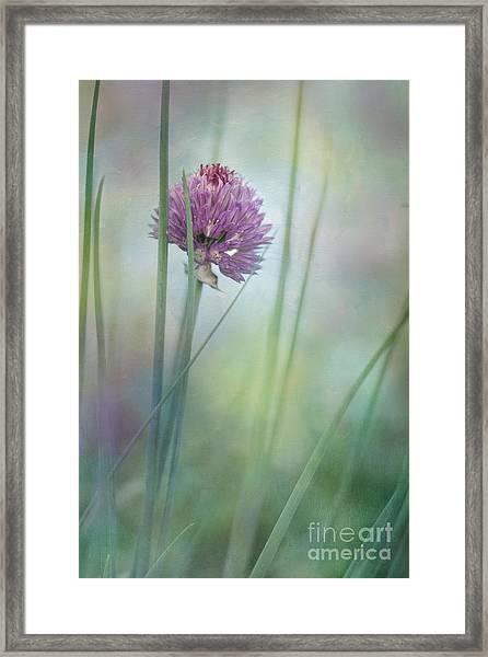 Chive Garden Framed Print