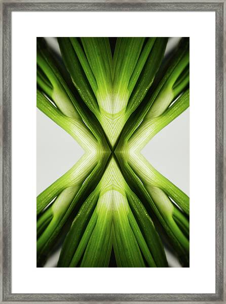 Chives Framed Print by Silvia Otte