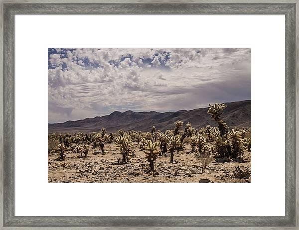 Cholla Cactus Garden Framed Print