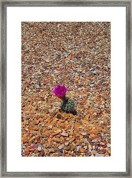 Cholla II Framed Print