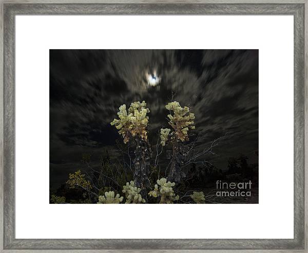 Cholla Light - Joshua Tree National Park Framed Print