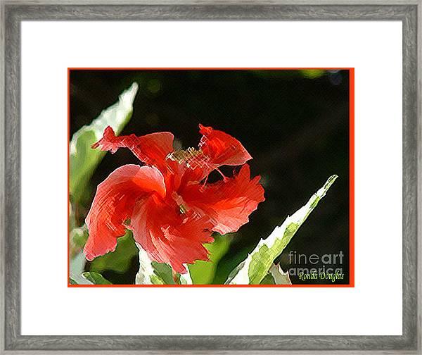 Christmas Blossom Framed Print
