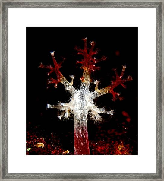 Christmas Framed Print by Sok wan andy Yeo