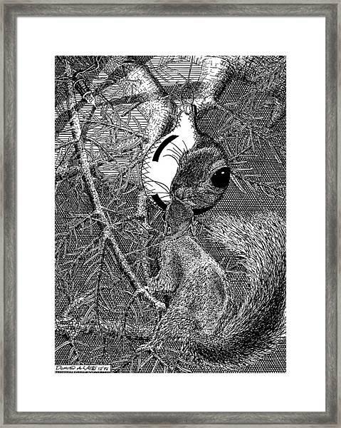 Christmas Tree Squirrel Framed Print