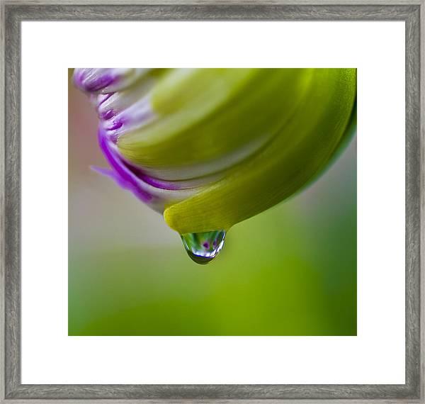 Raindrop Bud Framed Print