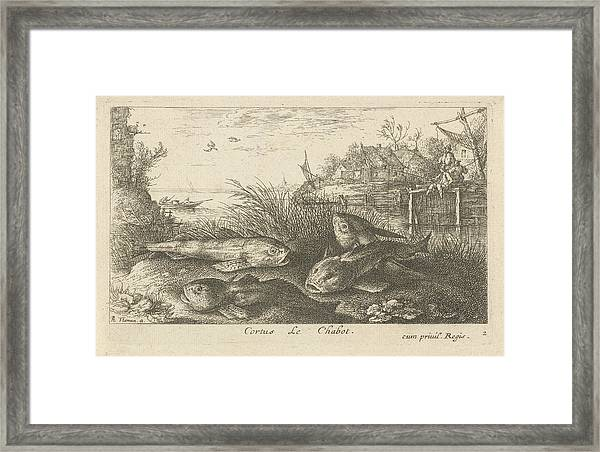 Chub, Squalius Cephalus On A Riverbank, Print Maker Albert Framed Print by Albert Flamen And Jacques Van Merlen