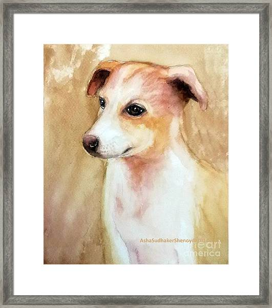 Chutki The Pet Dog Framed Print