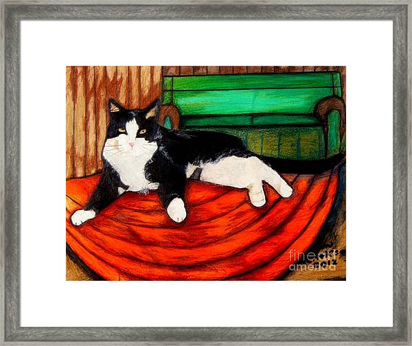 Cici The Cat Framed Print