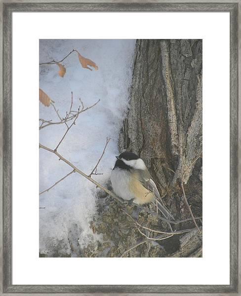 Cickadee And Bark Framed Print