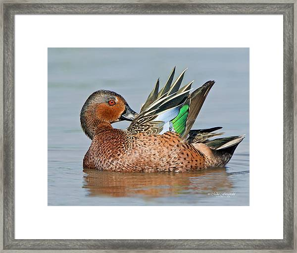 Cinnamon Spice Framed Print by Mike Fitzgerald