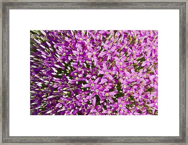 Centrifugal Mountain Pink Flowers Framed Print