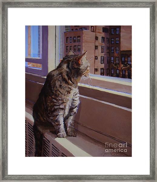 City Kitty Enjoys Her View Framed Print