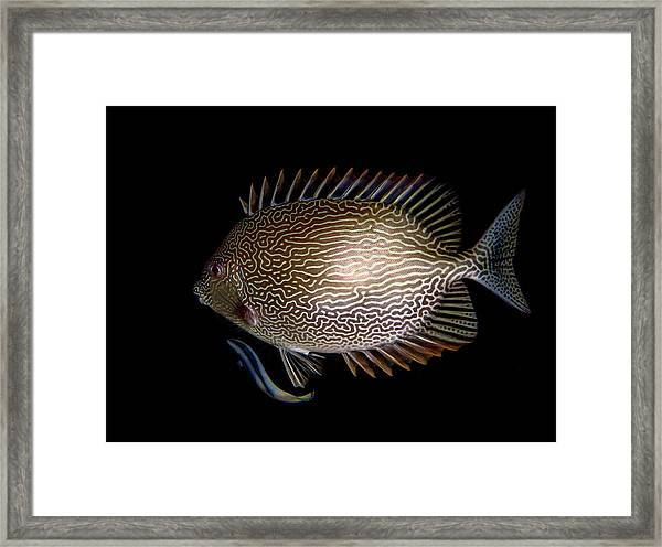 Cleaning Station Framed Print