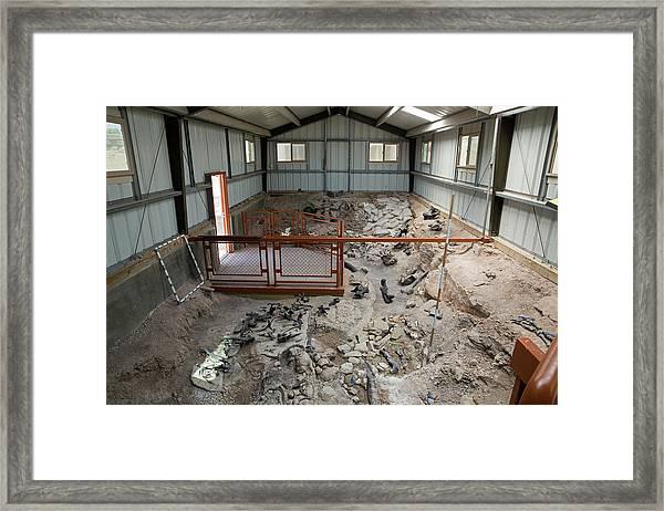 Cleveland-lloyd Dinosaur Quarry Fossils Framed Print