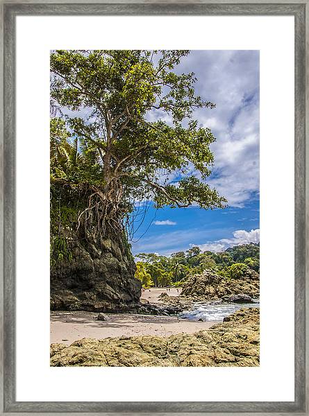 Cliff Diving Tree Framed Print