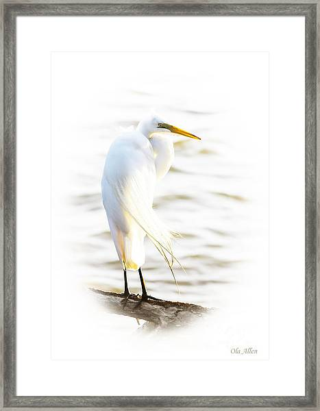 Cloaked And Wrapped Framed Print