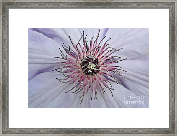 Close Clematis Framed Print