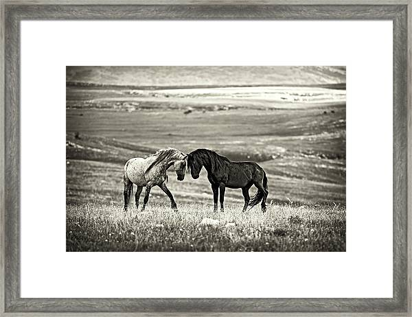 Close Encounter Framed Print by Vedran Vidak