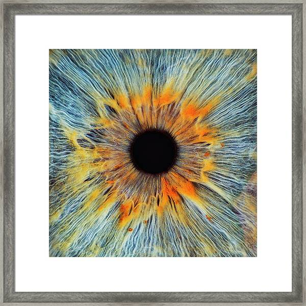 Close-up Of A Human Eye, Pupil And Iris Framed Print by Dimitri Otis