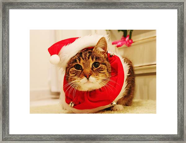 Close-up Of Christmas Cat Framed Print