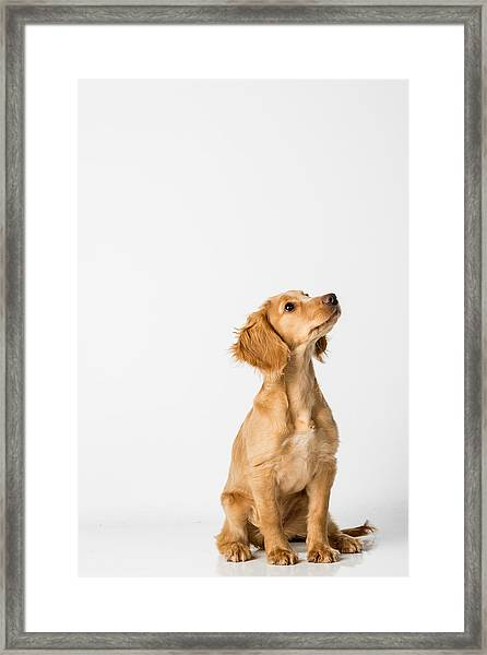 Close-up Of Dog Sitting Against White Background Framed Print by Peter Rose / EyeEm