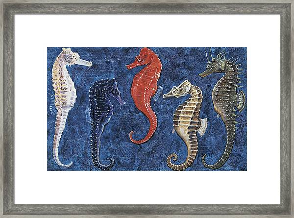 Close-up Of Five Seahorses Side By Side  Framed Print