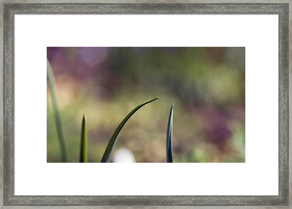 Close-up Of Leaves Against Blurred Background Framed Print by Paulien Tabak / EyeEm