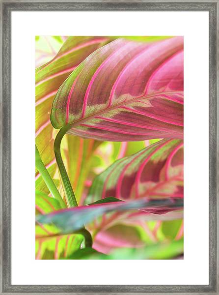 Close-up Of Pink And Green Tropical Framed Print