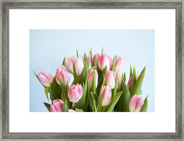 Close Up Of Pink Tulips Framed Print
