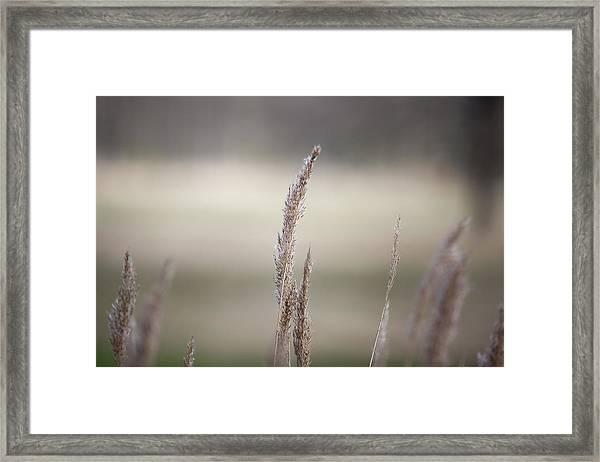 Close-up Of Plant Framed Print by Paulien Tabak / EyeEm