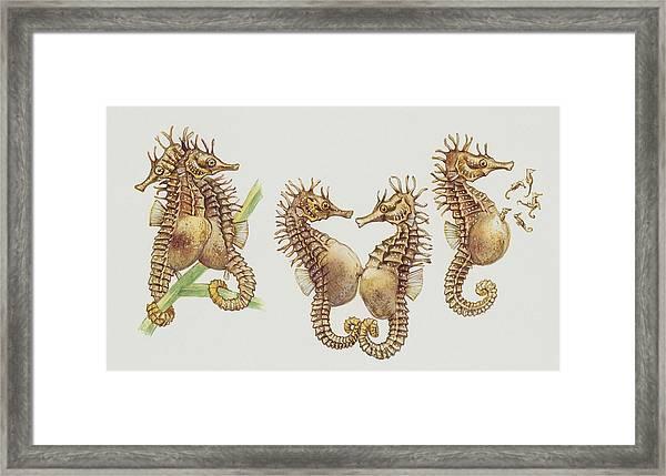 Close-up Of Sea Horses Framed Print