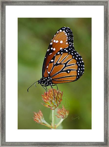Close-up Pose Framed Print