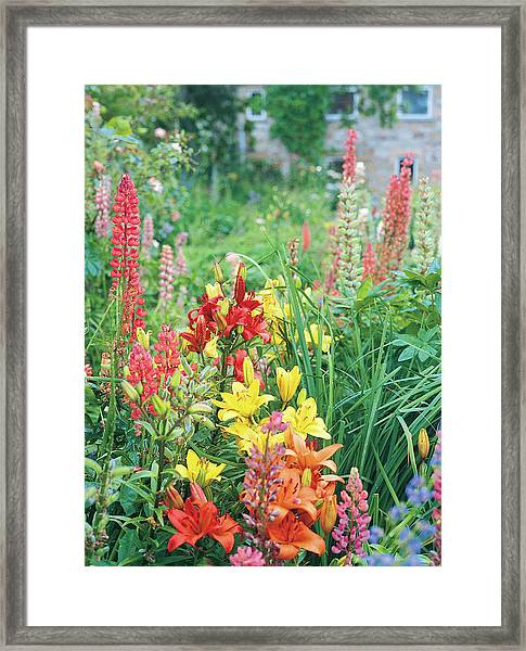 Close-up View Of Colourful Flowers Framed Print