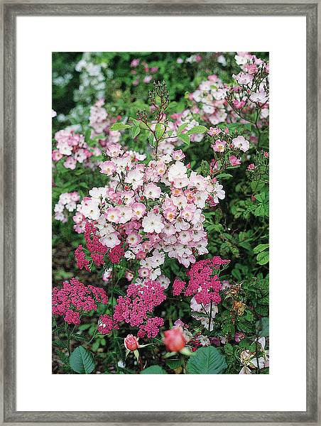 Close-up View Of Pink Flowers Framed Print
