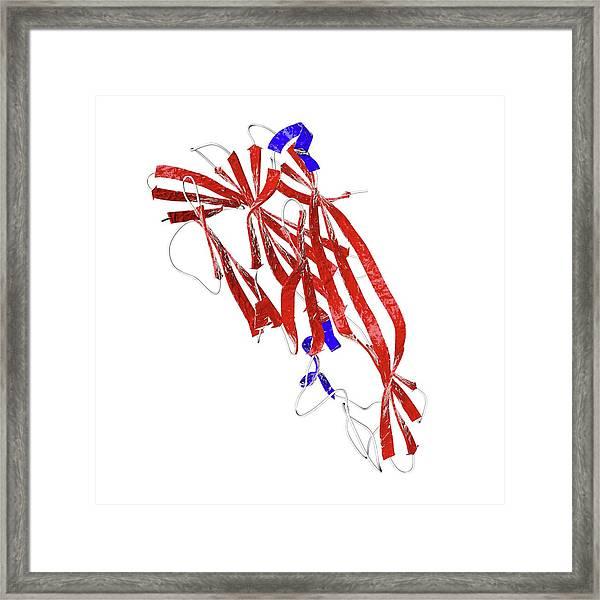 Clostridium Delta Toxin Framed Print
