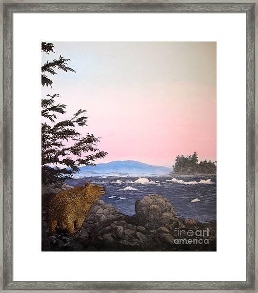 Coastal Bear Framed Print