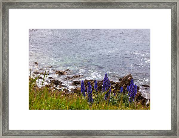 Coastal Cliff Flowers Framed Print
