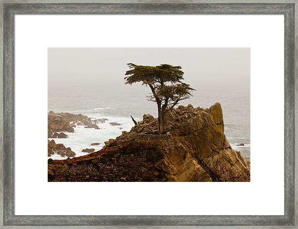 Coastline Cypress Framed Print