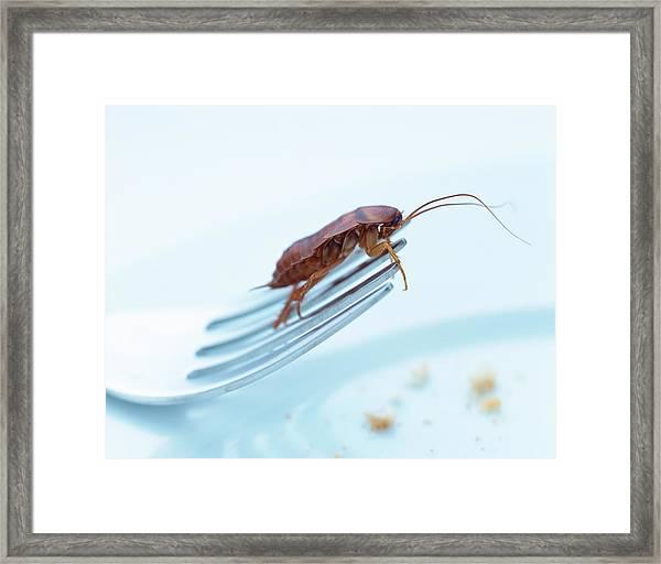 Cockroach On Fork Framed Print